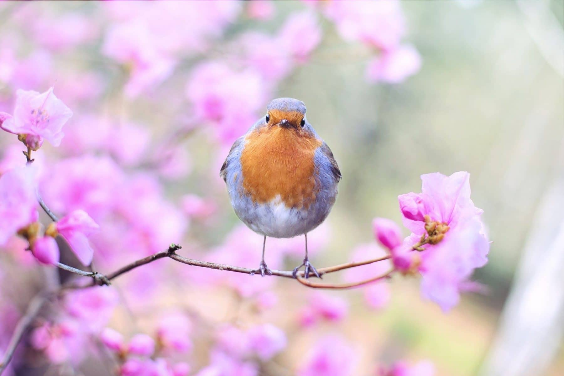 Sauvegarde de la biodiversité